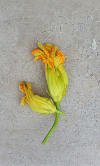 Zucc flower 3